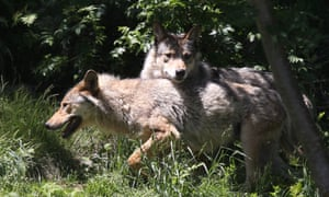 Livestock breeders in France have called for government action to tackle the problem of wolves killing their animals.