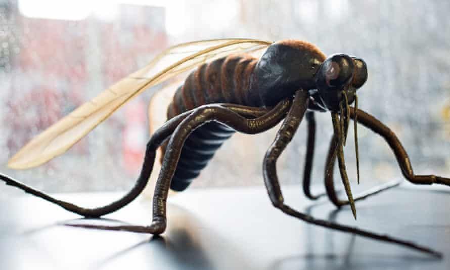 Press conference on mosquito research in Germanyepa05175479 The model of a mosquito (Culicidae) is pictured in a laboratory of the Bernhard Nocht Institute for Tropical Medicine in Hamburg, Germany, 22 February 2016. Due to the spread of Zika, Dengue and West Nile viruses, Germany is stepping up its research on mosquitos by funding the project 'CuliFo' (Culicidae-Forschung, lit. Culicidae research) at the Bernhard Nocht Institute with 2.2 million euros. EPA/CHRISTIAN CHARISIUS