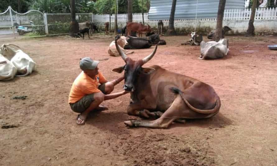 Welfare For Animals in Goa