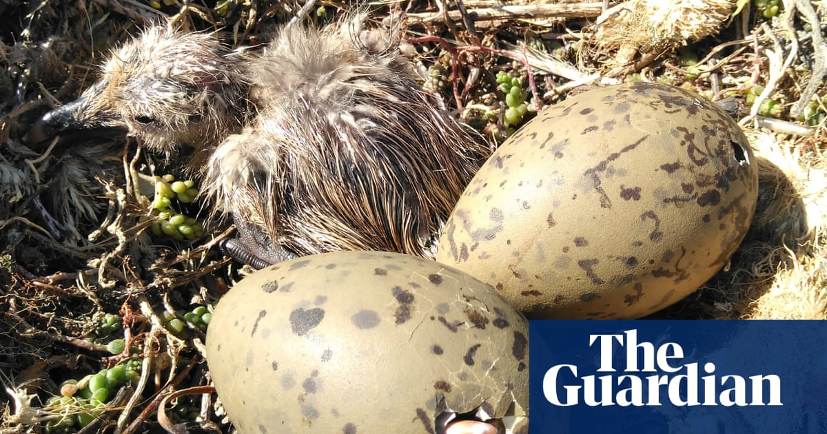 Unhatched birds can warn others of danger by vibrating shells