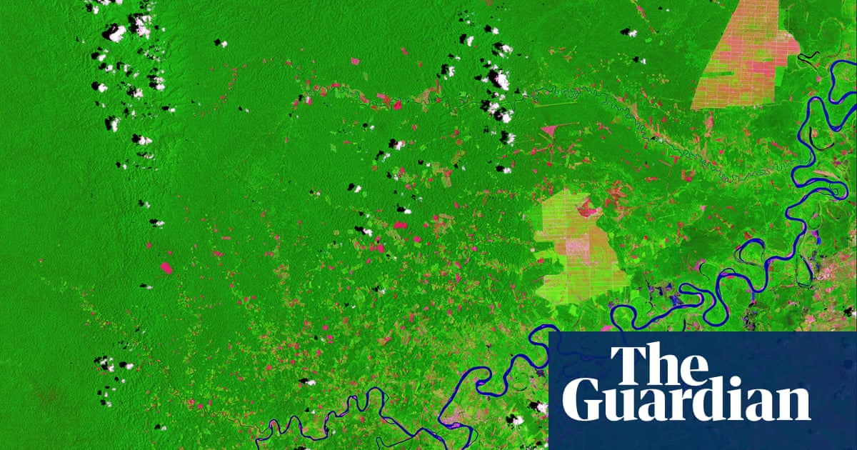 'Greenwash': oil giant under fire over plan to protect tropical forests