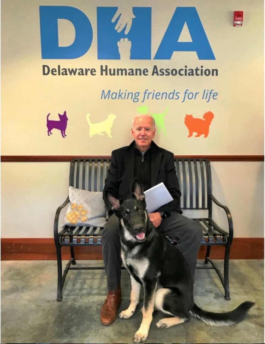 Joe Biden's rescue dog Major