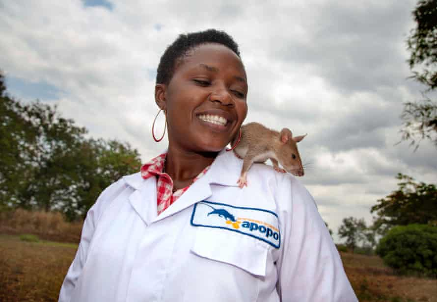 An Apopo staff member with a rat.