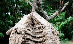 An Asian hornet's nest in Gloucestershire was destroyed by the National Bee Unit to stop the species' spread in the UK.