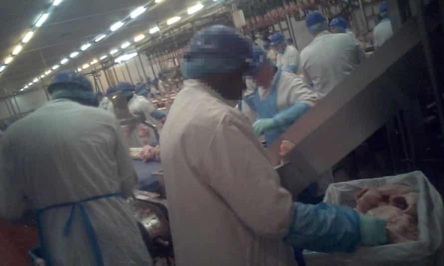 Chicken being processed and labelled for sale to supermarkets in the UK.