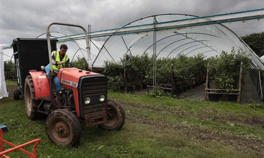 Traktorové a čučoriedkové kríky