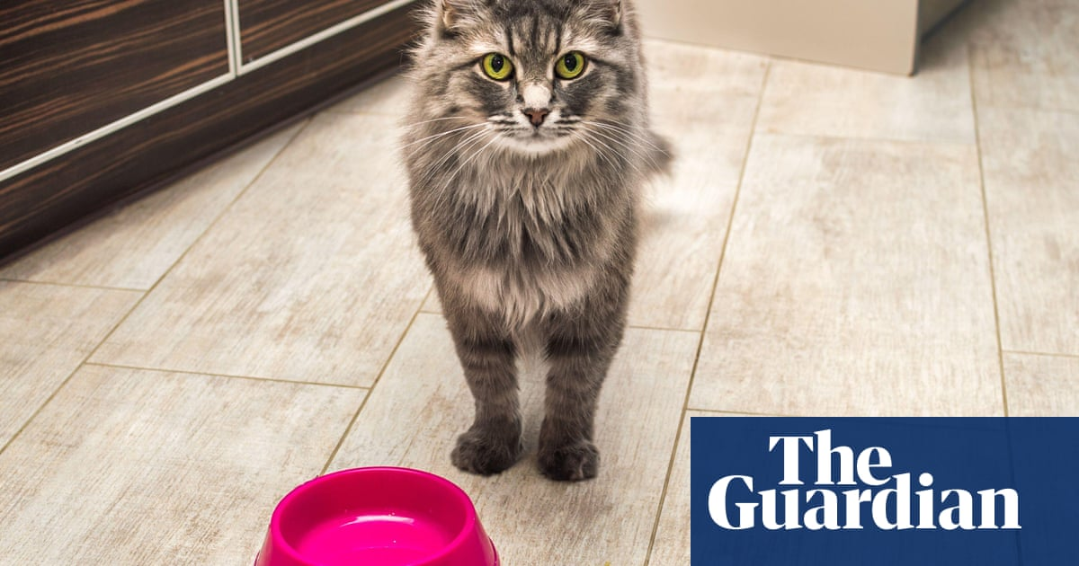 What should we be feeding our cats? – podcast