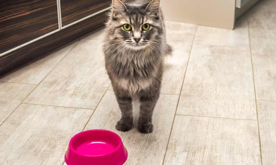 Cat with empty food bowl.