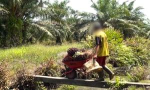 Child worker on a palm oil plantation