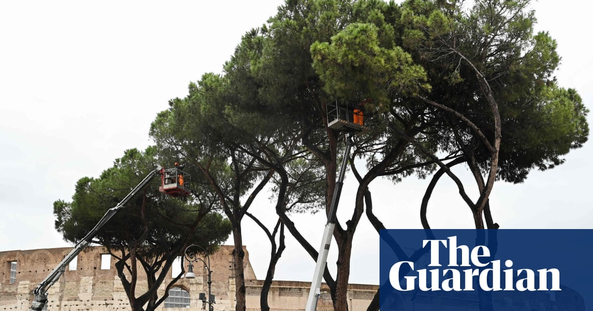 €500,000 set aside to save Rome's pine trees from deadly parasite
