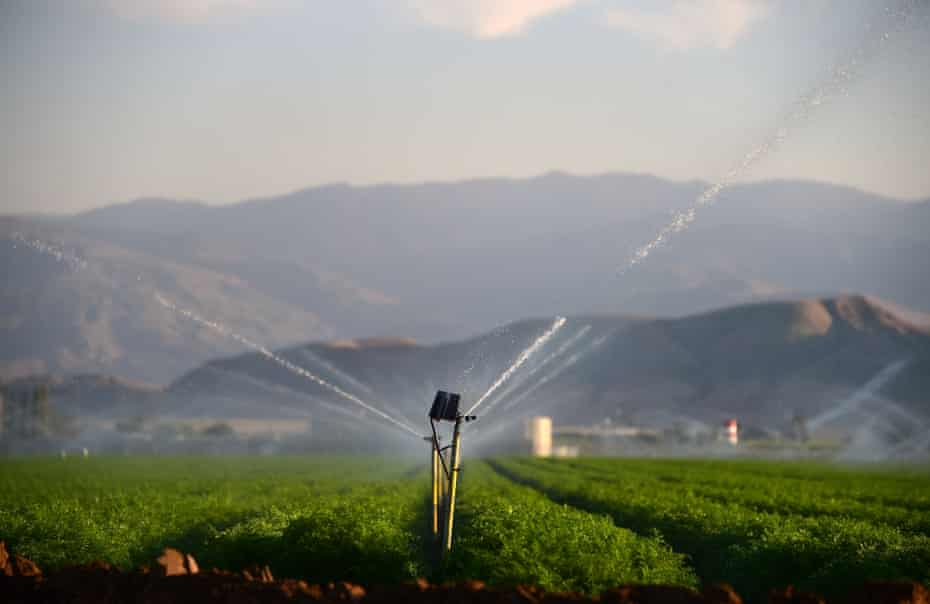 Fields of carrots are watered in Kern County. Farmers have raised concerns about the effects of new drilling on the water and air.