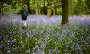 A Bluebell Wood With A Blurry Figure In The Distance
