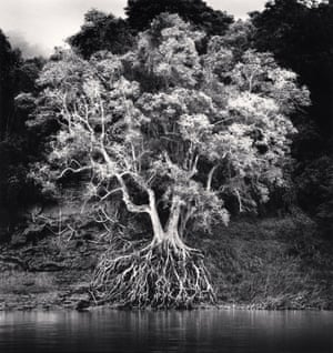Kokdua Tree and Exposed Roots, Mekong River, Luang Prabang, Laos 2015, Michael Kenna