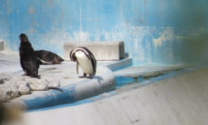 Penguins at the Inubosaki Marine Park Aquarium