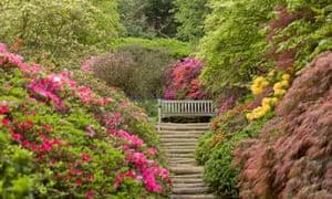 Azalées, printemps, Winkworth arboretum