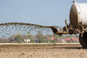 Muck-spreading, the agricultural practice of spraying liquid manure on fields, is a key source of ammonia pollution