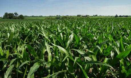 Trump may have already lost Iowa to the 2020 Democratic candidates – over corn