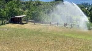 Sprinklers spray water on a horse in Kelowna, British Columbia