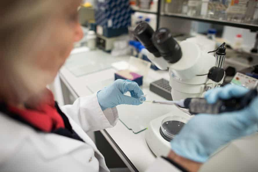 A scientist in the laboratory at Nottingham University