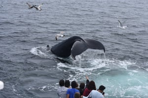 Tourist trips help to fund research on the whales