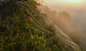 A California-based company is making high performance sustainable fabrics using a bioengineered yeast designed to mimic the silk-producing abilities of spiders.