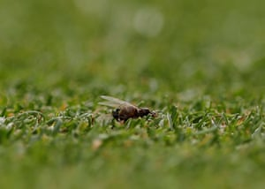 Meanwhile over at Wimbledon, flying ants are causing havoc for some of the players