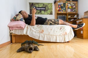 Liu Zhaobei, 25, lies in his bedroom with an alligator snapping turtle (Macrochelys temminckii)