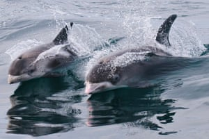 A specific site for the white-beaked dolphin is recommended in Lyme Bay