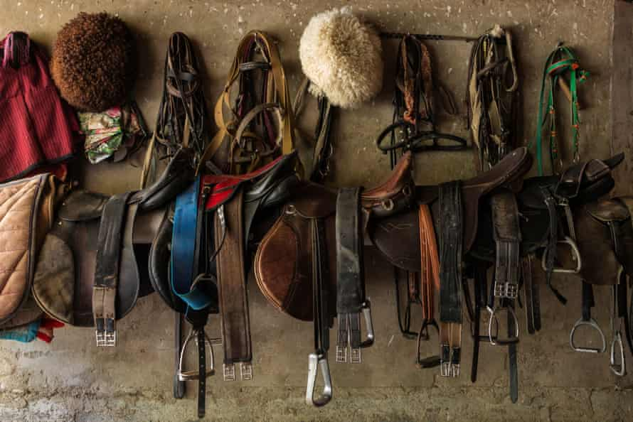 Saddles hanging on a wall.