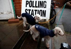 A pair of Bedlington terriers in Brighton