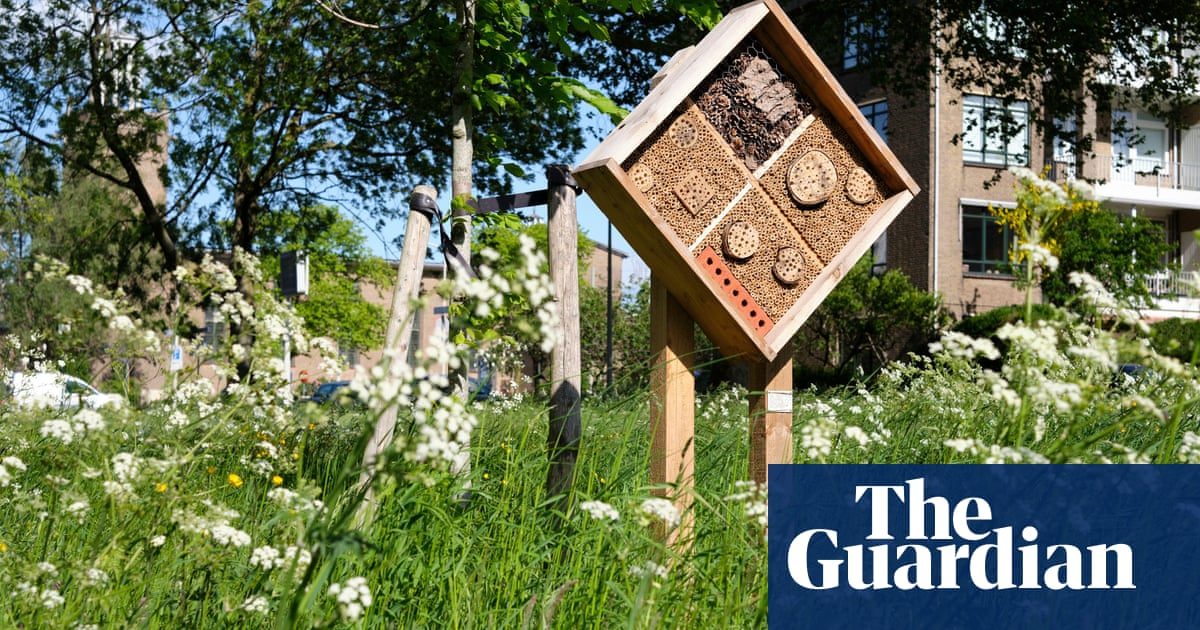 Bee population steady in Dutch cities thanks to pollinator strategy