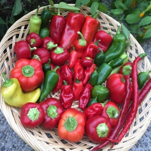 photo of basket of chillies