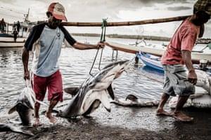 Shark fishermen haul their daily catch
