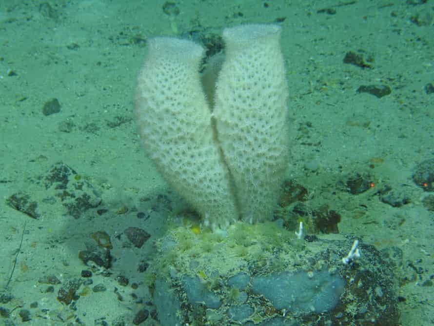 Deep-sea sponges