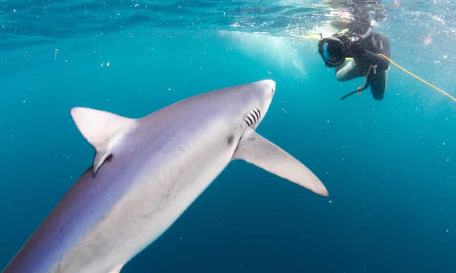 A blue shark appears from the depths.