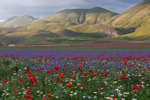 A view of fields of flowers during the annual blossom in Castelluccio di Norcia near Perugia, Italy.