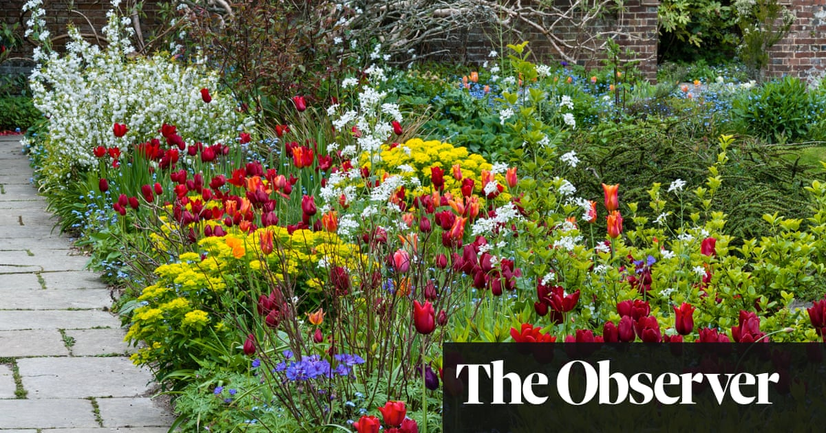 Time to give up the pot: why it's much better to plant in