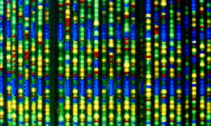 A computer display of a DNA sequence.