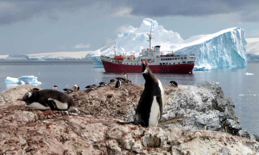 penguins on the Antarctic Peninsula