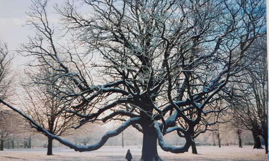 Gillian Hughes' horse chestnut.