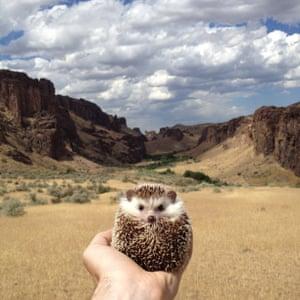 Biddy the Hedgehog.