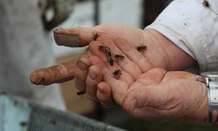 On a working day, a beekeeper can be stung up to 60 times.