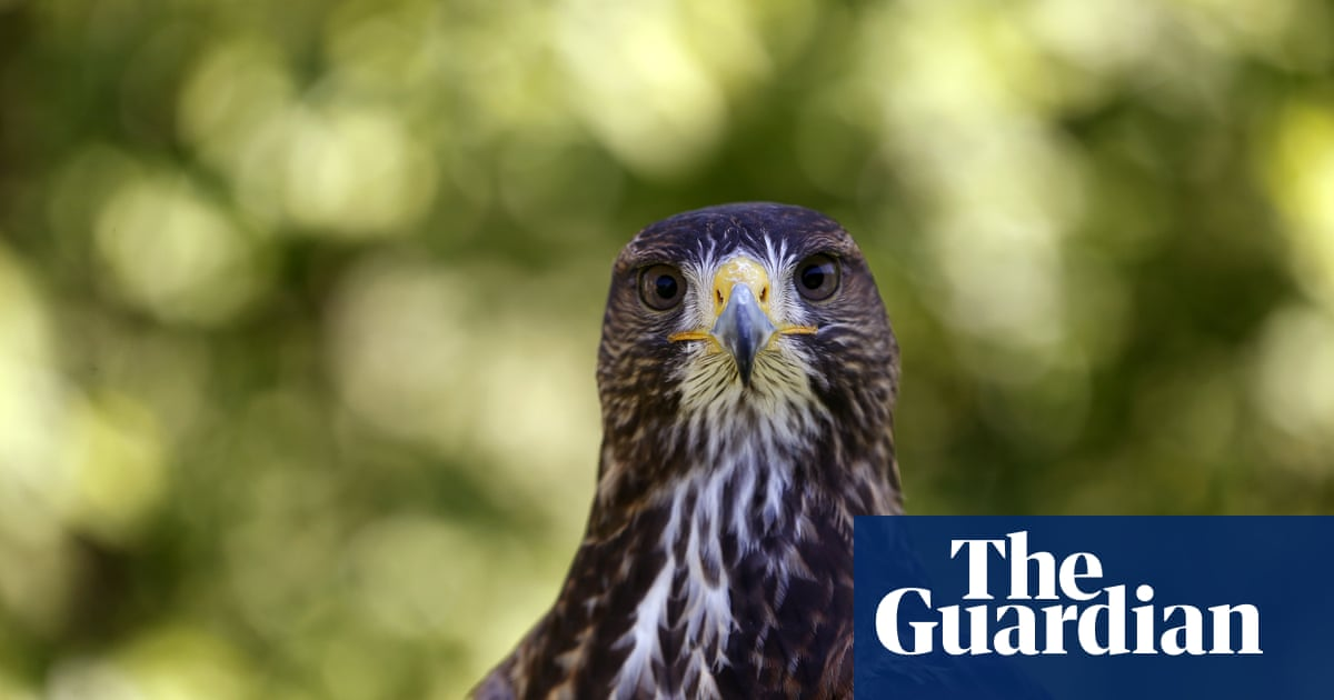 I'm a falconer - and there's nothing like watching a bird you