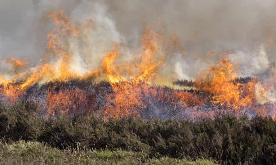 Heather burning on a grouse moor in the Yorkshire Dales