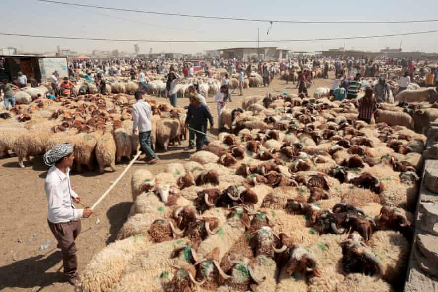 Traders at a livestock market in Erbil, the capital of Iraqi Kurdistan.