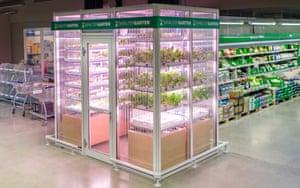 Indoor farm in Berlin's Metro Cash & Carry supermarket.