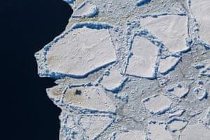 Emperor penguins linger on the ice edge at Cape Washington, Ross Sea, Antarctica