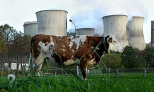 Snapshot of two industries: a cow at a power station, Bergheim, Germany.