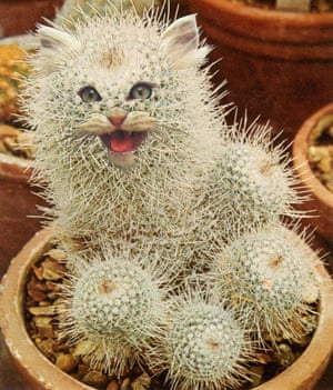 A collage of a cat-faced cactus by Stephen Eichhorn