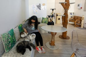 The owner plays with the cats